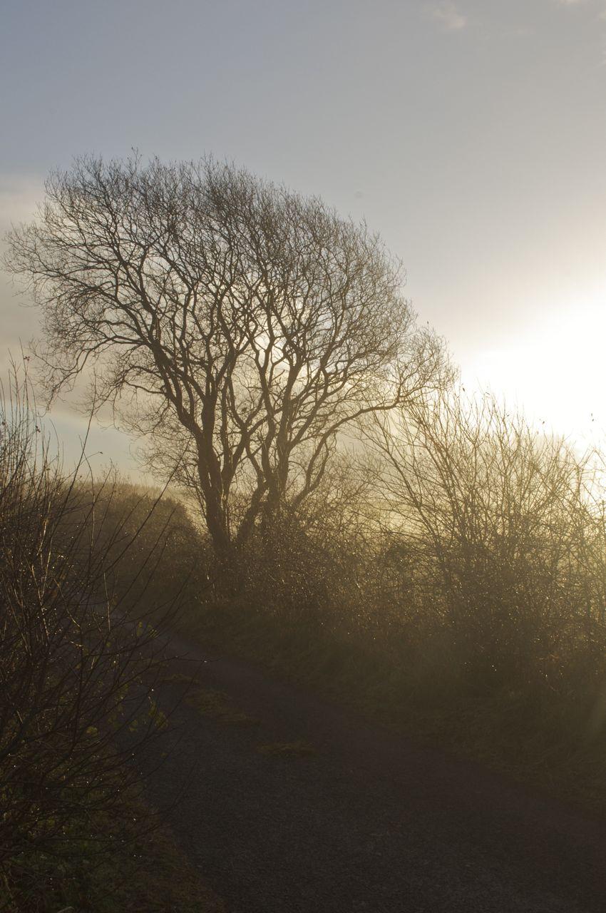 10.00 am - sun breaking through the fog