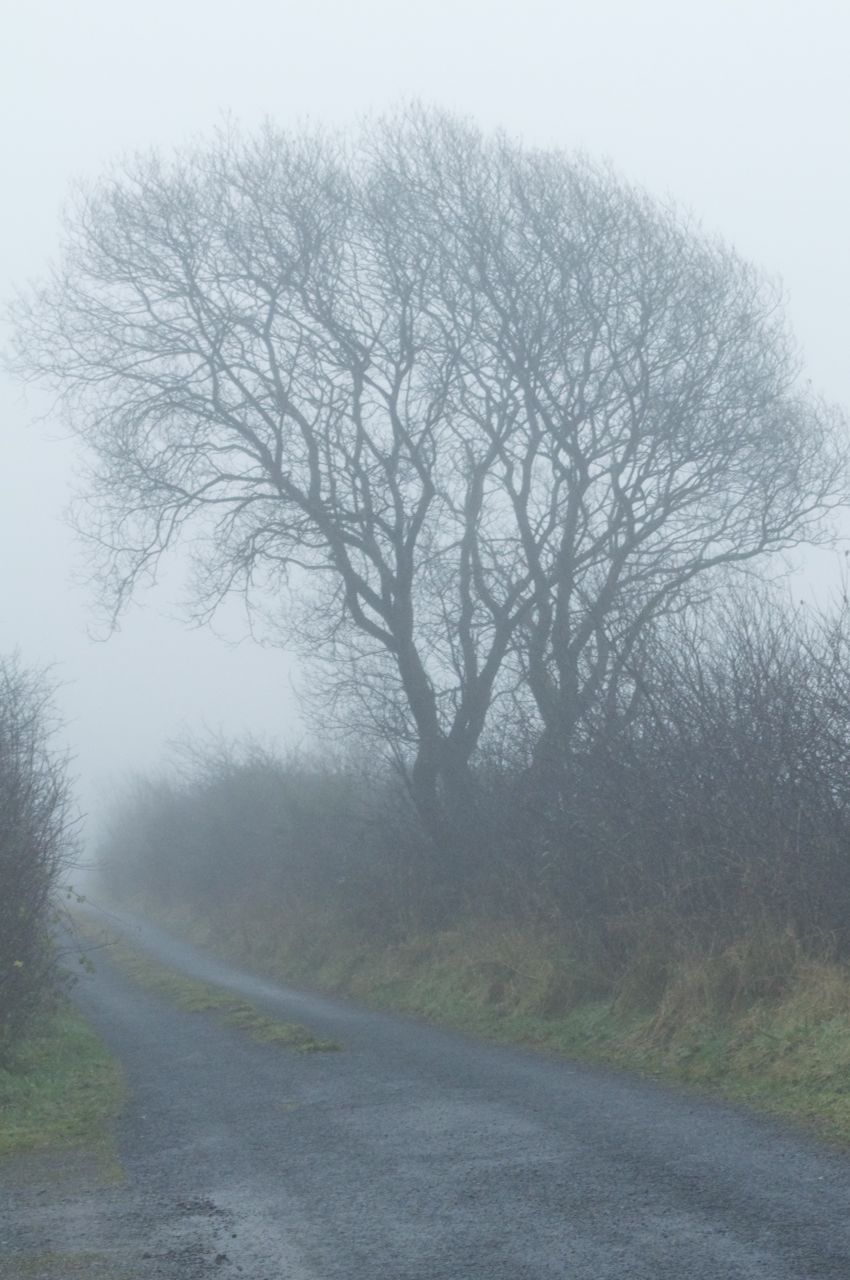 The morning mist that stayed all day... 18th December 8.30am