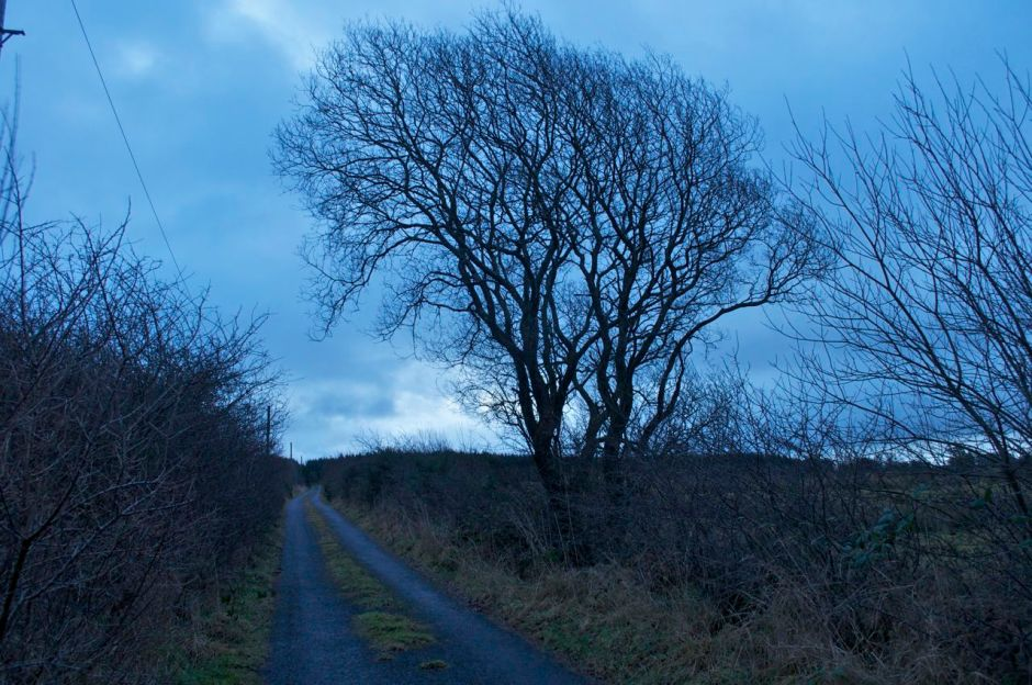 31st December- 8.35am - calm and mild after the heavy rain and gales