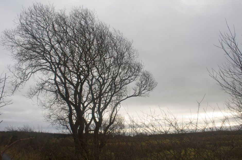 2nd January 12.00pm - a cloudy mild day
