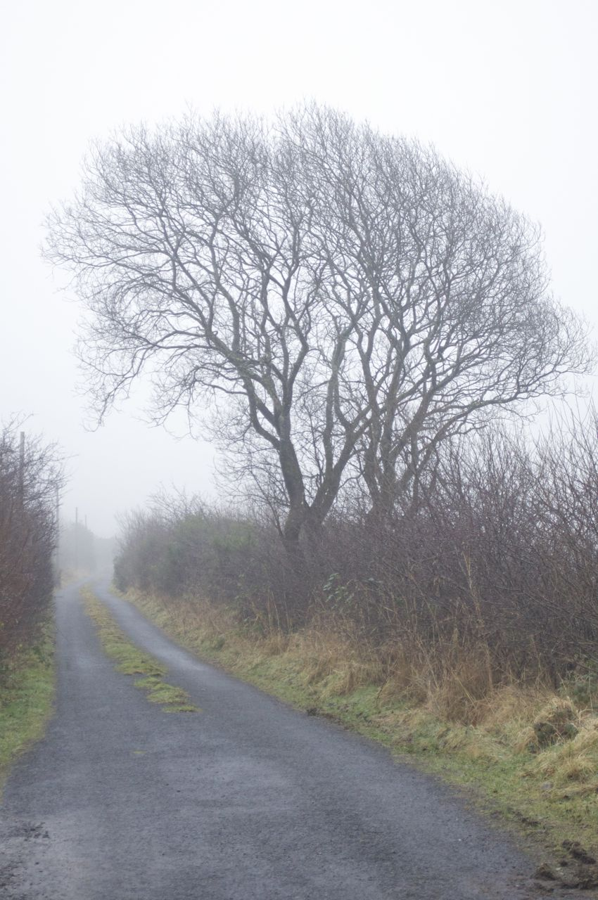 19th January 2013, 10.15am - another cold and misty day....