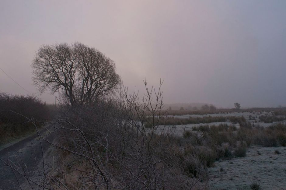 24th January 2013, 845am - a freezing and foggy start to the day that ended milder and misty