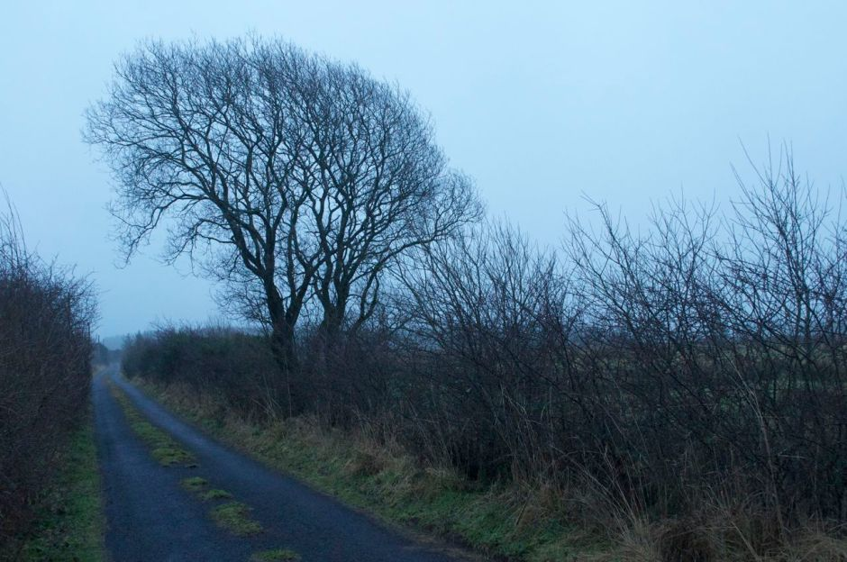 12th Februaty 2013, 8.05 am - a dull and chilly day, again...
