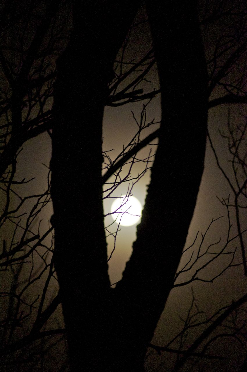 26th February 2013, 5.00 am - bright moon and lots of frost...