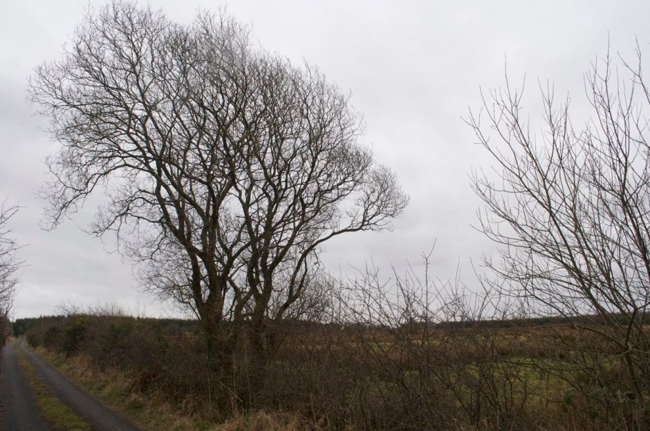 10th March 2013, 12.42pm - very cold dull day